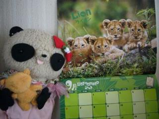 9月はライオン