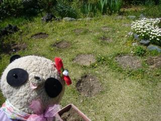 庭がぽこぽこ