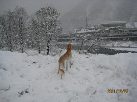 20111225_IMG_2440.jpg