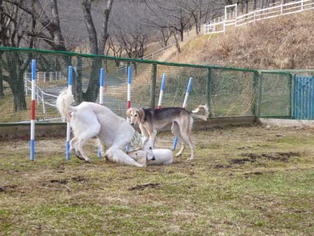 2012-02-18 相模湖プレジャーフォレスト 041s