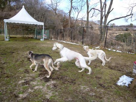2012-02-18 相模湖プレジャーフォレスト 031s