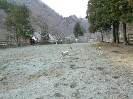2012-03-25 西丹沢ウェルキャンプ 041s