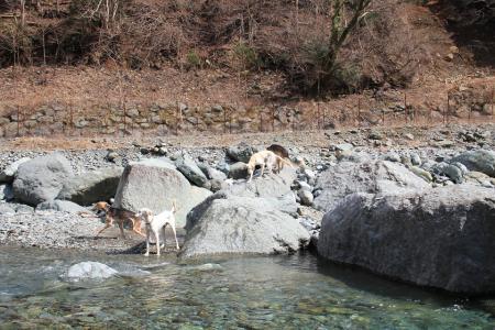2012-04-08 今年初の丹沢 060s