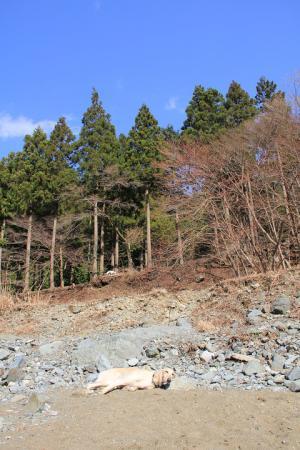 2012-04-08 今年初の丹沢 100s