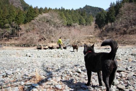 2012-04-09 丹沢with甲斐犬 012 (800x533)