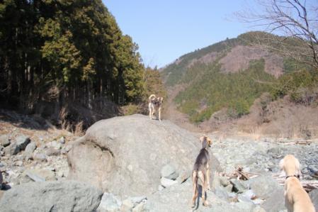 2012-04-09 丹沢with甲斐犬 060 (800x533)