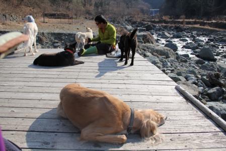 2012-04-09 丹沢with甲斐犬 133 (800x533)