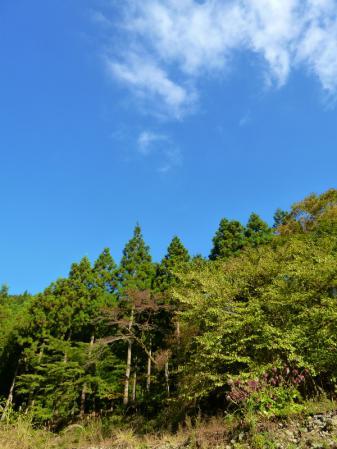 tanzawa20111026_P1000113.jpg