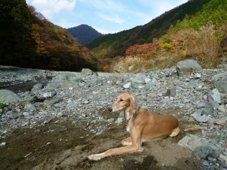 tanzawa2011113_P1010058.jpg