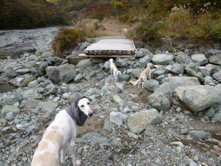 tanzawa2011113_P1010178.jpg