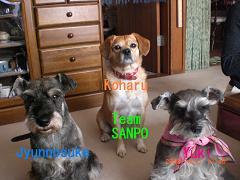 Team SANPO2 15
