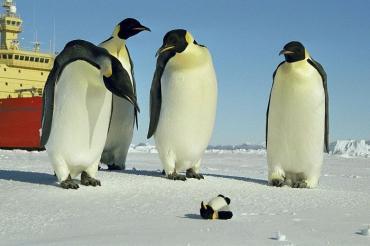 面白ペンギン