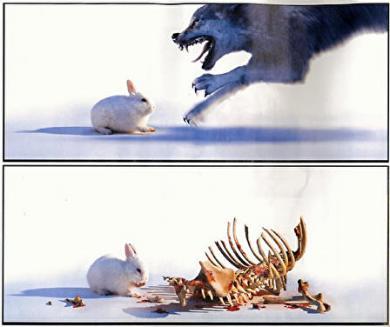 肉食のウサギ