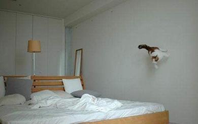 飛んでる猫?