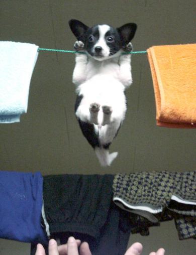 洗濯物?!