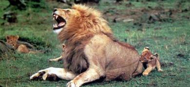 これから私がライオンキング