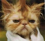 punkcats.jpg