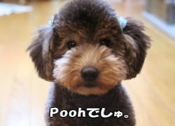 Poohでしゅ。。。