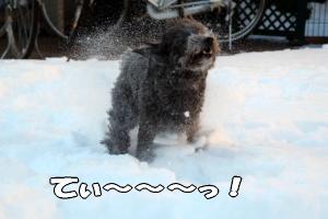 雪を撒き散らし