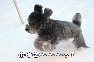 そして楽しそうに走るお馬鹿犬