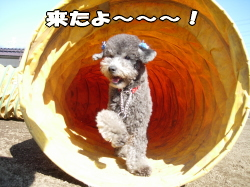 何故か命令もしないのにトンネルを潜り抜け・・・