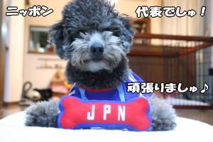"""オマケは""""JPN""""のロゴ入りオモチャ"""