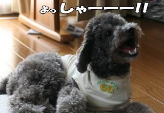 お馬鹿犬も歓喜の雄叫び!?
