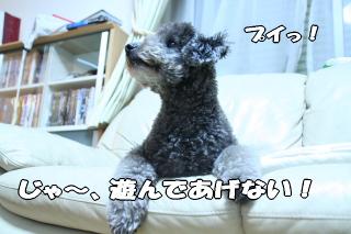 誰かさんに似てセコイ犬
