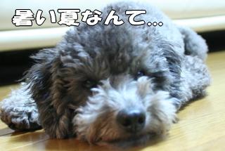 犬の天敵、夏が来る!