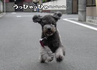 """お馬鹿犬お得意の""""バカっ走り"""""""