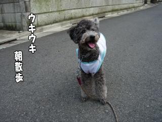 お馬鹿犬はニコニコ、オヤジは・・・