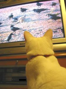 テレビプリン