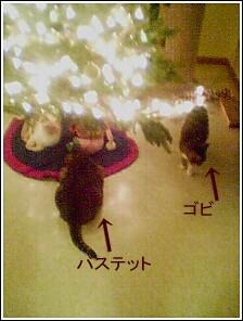 kinoshita21.jpg