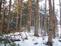 0901268トドマツ林