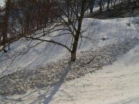 浦臼山 雪崩がたくさん