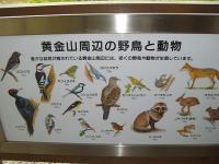黄金山周辺の動物
