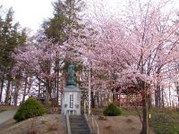 丸山公園 桜も綺麗でした♪