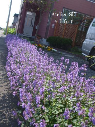 DSCF4313_convert_20100613095202.jpg