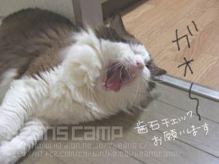 CIMG0582.jpg