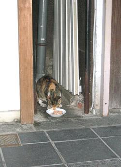 熊本-くまもと-カフェ-グルメ-お菓子-スイーツ-福岡-太宰府-喫茶店-コーヒー-猫