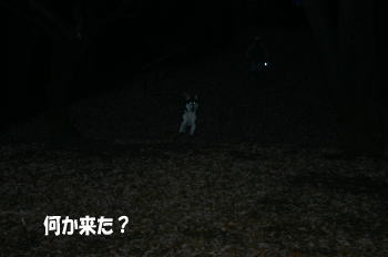 0111_1.jpg