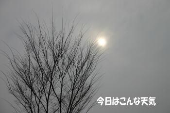 0129_1.jpg