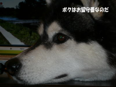 080525_4.jpg