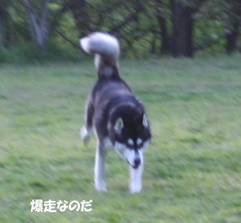20070420_3.jpg
