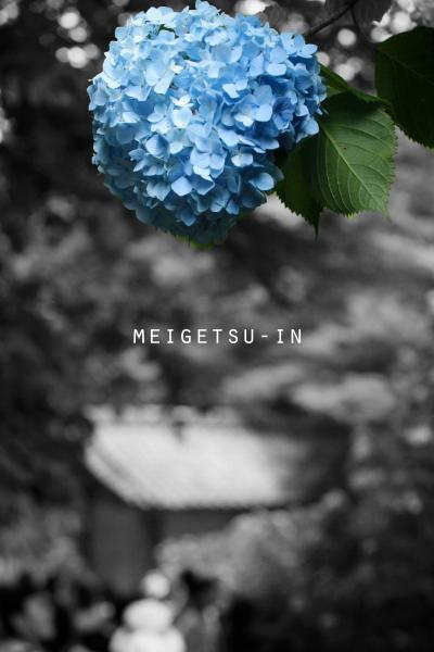 IMG_4244_edited-1.jpg