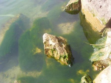 水中の青海苔