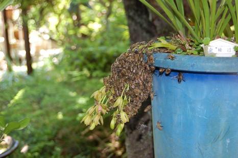 残った蜜蜂
