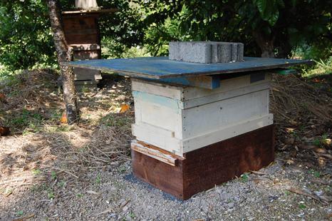 横巣枠式巣箱(西洋蜜蜂用)
