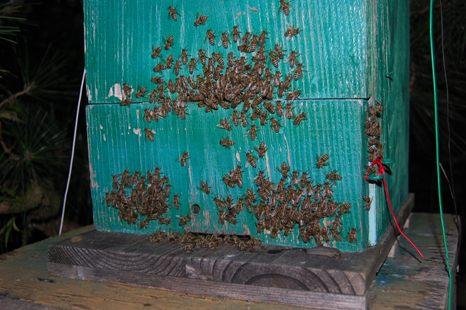 日本ミツバチ巣箱(夜)