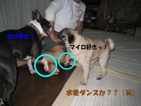 IMG_2663 スキスキマイロ